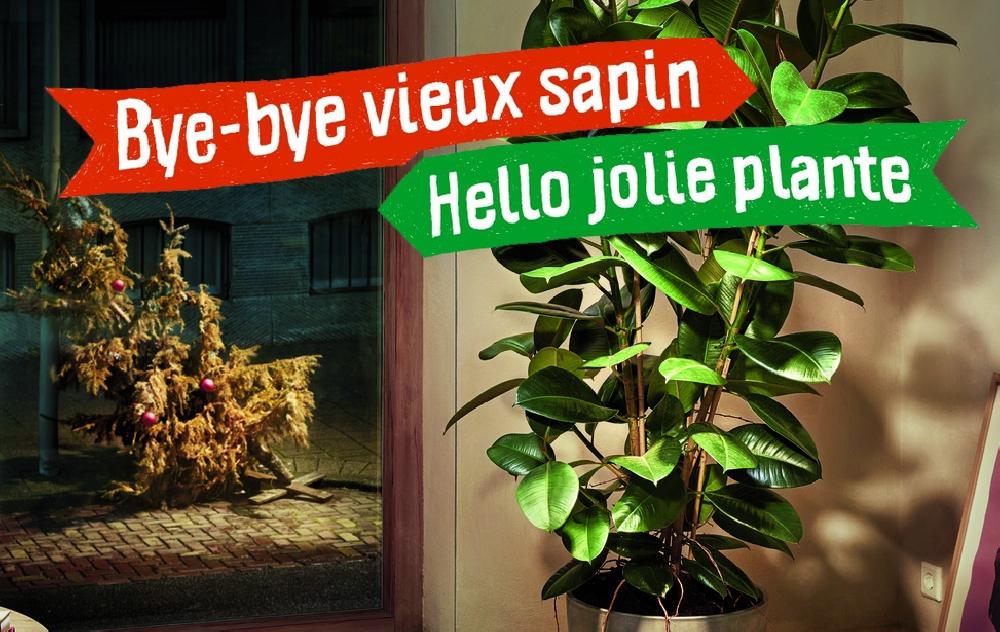 Bye bye vieux sapin... Hello jolie plante !